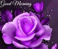 good morning wishes feelings Funny Good Morning Wishes, Good Morning Wishes Friends, Good Morning Today, Good Morning Kisses, Morning Morning, Happy Morning, Good Morning Greetings, Morning Rose, Morning Blessings