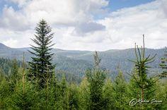 Schwarzwald Wanderung  #Landschaft #Natur #Wald