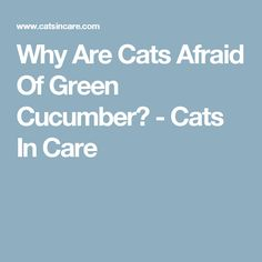 Why Are Cats Afraid Of Green Cucumber? - Cats In Care