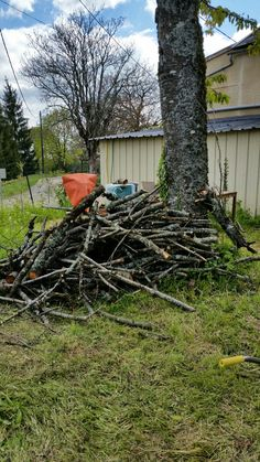 Resultaat van de helft omgehakte kersenboom