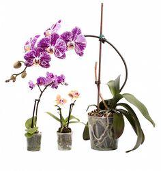 Vertical Planter, Glass Vase, Flora, Gardening, Home Decor, Orchids, Cactus, Decoration Home, Room Decor