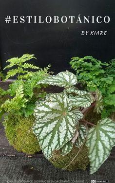 Aprender a combinar plantas según tu estilo decorativo (industrial, minimalista,..) es muy fácil, suscríbete a mi blog y recibe este ebook de inspiración gratis Industrial, Plants, Blog, Minimalist, Industrial Music, Blogging, Plant, Planets