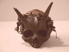 The existence of horned human skull is probably one of the most controversial artefact's in existence, and certainly not one that medical science can easily explain away. The skull was discovered in France between 1920 and 1940. Surnateum, The Museum of Supernatural History, however, analyzed the skull. Their analysis demonstrated that the horns are genuinely part of the skull. The analysis concluded: 'An in-depth examination and X-rays leave no room for doubt: the skull is not a forgery.'