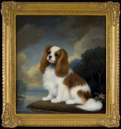 Cavalier King Charles Spaniel in a Landscape