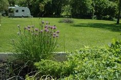 7 visitors have checked in at Miklósi. Camping, Caravan, Plants, Rice, Campsite, Plant, Campers, Motorhome, Tent Camping