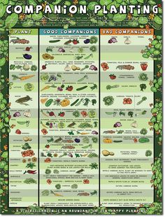 Companion Planting Chart - Companion planting is an ancient, natural and beautiful way of producing more without pesticides that highlights our own interconnectedness.