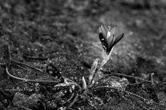 """Mi piace"": 354, commenti: 9 - Andrea Pintus (@ndrpintus) su Instagram: ""Small beauty in winter... . . #igers #igersitalia #sardinia #vscocam #igdaily #bnw #lamaddalena…"" Sardinia, Ph, Winter, Instagram Posts, Beauty, Winter Time, Beauty Illustration, Winter Fashion"
