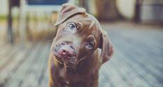 Γιατί ορισμένοι σκύλοι γέρνουν το κεφάλι τους όταν τους μιλάμε;