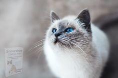 Ocicat, White Cats, Grey Cats, Black Cats, Sphynx Gato, Girl Cat Names, Best Cat Breeds, Cat Allergies, Birman Cat