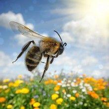 Piqure-insecte Savez-vous que vous pouvez apaiser une piqûre d'insecte (abeille, guêpe, araignée...) ou une piqûre d'ortie grâce à des produits que vous consommez régulièrement et qui se trouvent dans toutes les maisons ?