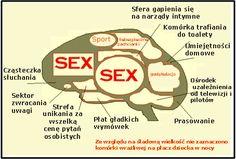 Mózg mężczyzny