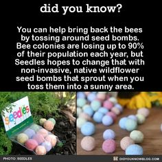 "spontcompostion: ""did-you-kno: "" You can help bring back the bees by tossing around seed bombs. Bee colonies are losing up to of their population each year, but Seedles hopes to change that with. The More You Know, Good To Know, Did You Know, Just For You, Save Our Earth, Save The Planet, Our Planet, Comment Planter, Wtf Fun Facts"