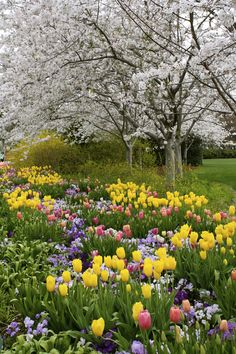 Dallas Blooms – Texas Farmhouse – Join in the world of pin Beautiful Landscapes, Beautiful Gardens, Spring Flowers, Wild Flowers, Spring Colors, Dallas Arboretum, Spring Landscape, Flowering Trees, Spring Day