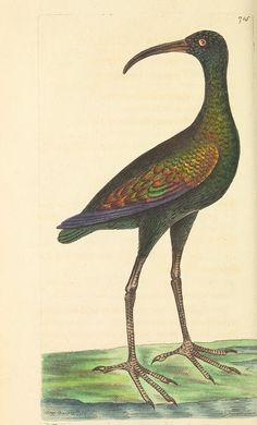v.17 - The naturalist's miscellany, or Coloured figures of natural objects - Biodiversity Heritage Library