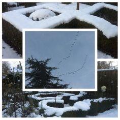 Er is vannacht 10 cm sneeuw in de tuin gevallen. Van morgen vlogen de ganzen over de tuin, 13-1-2017.