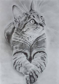 Et un sabord, le rêve devient truisme! Pencil Drawings Of Animals, Animal Sketches, Art Drawings Sketches, Realistic Drawings, Cat Tattoo Designs, Cat Sketch, Cat Photography, Cat Drawing, Colorful Pictures