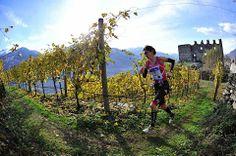 #Trailrunning Beautiful, beautiful, beautiful! Valtellina Wine Trail in Lombardia, Italy.