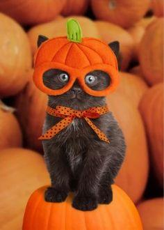 chaton-halloween-3