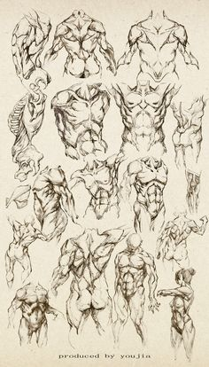 Anatomy study of a male - Male Torso - drawing reference