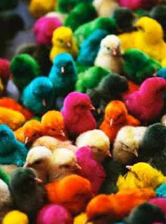 easter colored chicks