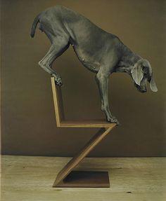 dog on reitveld zigzag chair   Balance in All Things - William Wegman