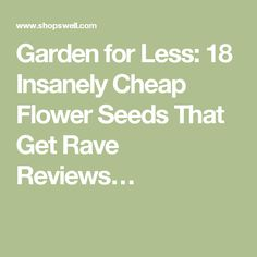 Garden for Less: 18 Insanely Cheap Flower Seeds That Get Rave Reviews…