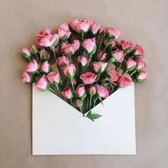 Dear Followers, just sending pink roses your way today!