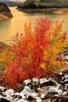 Maples along the Palisades Reservoir in eastern Idaho.  This reservoir is just up the road from my house.