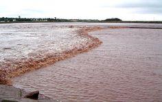 Tidal bore, Truro, Nova Scotia, Canada