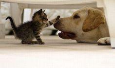 ..kitten