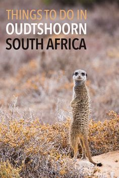 Oudtshoorn is a fantastic stop on the South Africa Garden Route road trip from Cape Town. Click through to read about things to do in Oudtshoorn including ostrich farms, meerkat safaris, Cango caves, and the Swartberg Pass to Prince Albert.
