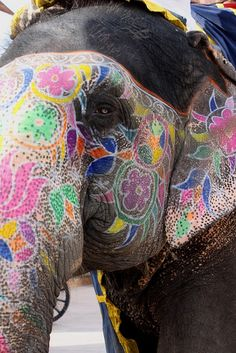 Painted elephant, India