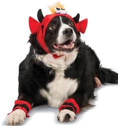 Devil Headpieces with Matching Paw Cuffs (Dog Halloween Costume - Discontinued 2012)