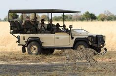 On a game drive at Little Vumbura Camp (Okavango Delta, Botswana). For more info just drop us a line: info@gondwanatoursandsafaris.com