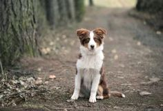 6 Poisonous Mushrooms That Are Toxic to Dogs