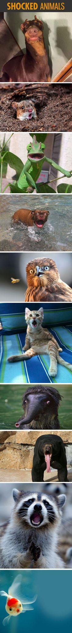 Some shocked animals...