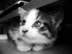 ラブリー-KittyCats、miezekatzen:怖がっ