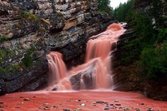 #CameronFalls, Cameron Creek, Alberta - #Canada. A strong storm has moved, from the surface of the rocks that surround the river, a large amount of sediment reddish. The water has been changed in appearance and in a couple of hours the waves colored tomatoes have come down the rapids.