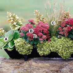 FALL GARDENING Mixed Materials - Shown is dried hydrangea mixed with a charming planting of Bergenia, Sedum and Rubygrass.