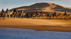 Camel trek is the best way to experience the Sahara