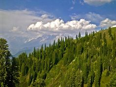 Payee Meadow - 9800 ft above sea level- Pakistan.