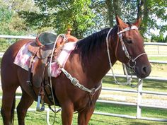 Smooth N Frosty 021 Bay Quarter Horse