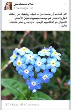 #ahlammsta4namy
