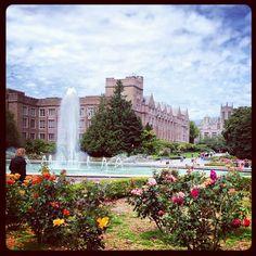 The rose garden at the @University of Washington