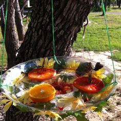 Our homemade butterfly feeder!