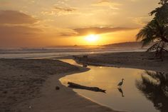 So. You're thinking about moving to Costa Rica to teach English. Or perhaps you…