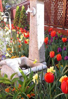 orange purple tulips Easter Flowers, Tulips Flowers, Purple Tulips, Orange And Purple, Flower Beds, Plants, Plant, Garden Beds, Flowers Garden
