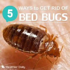 how to get rid of mosquitoes at home naturally