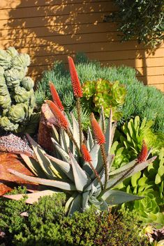 Gardens By Jenise: Magnificent, Mature Succulent Gardens - Michael Buckner - San Diego