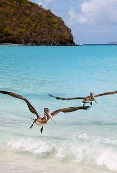Maho Bay - Virgin Island National Park - St. John - United States Virgin Island  (von johnhayes5032)